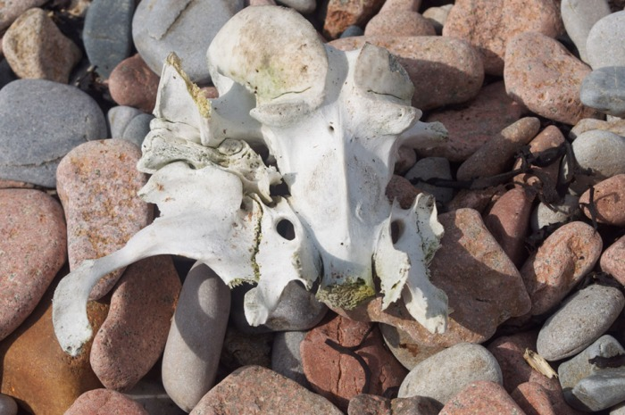 fossil on beach